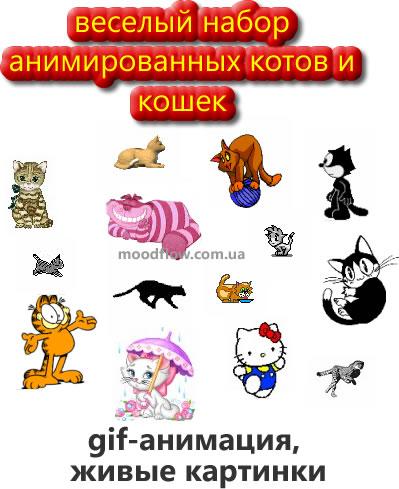 Кошки и коты набор изображений