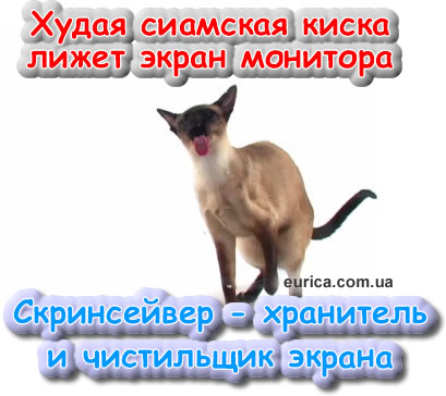 Сиамская худая кошка лижет экран с той стороны. Скринсейвер - Заставка
